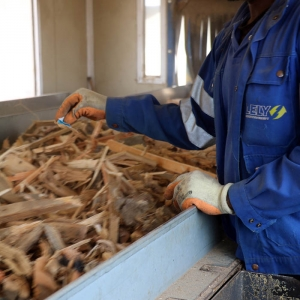 Production de combustible en bois